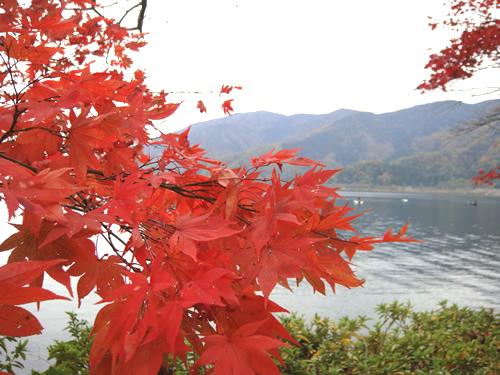 琵琶湖、大浦の紅葉