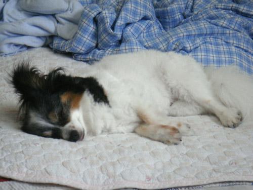 リムの寝顔の写真