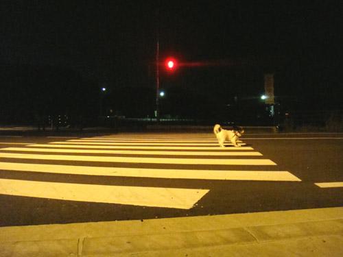 夜中の散歩