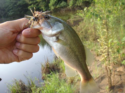 野池でバス釣り