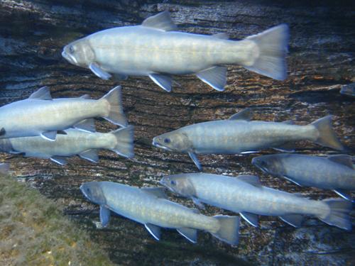 淡水魚園水族館