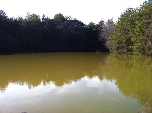 関市の野池