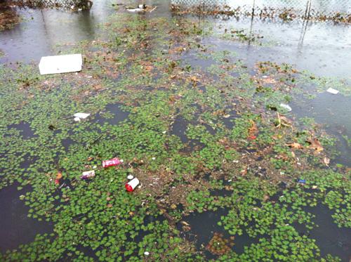 野池のゴミ