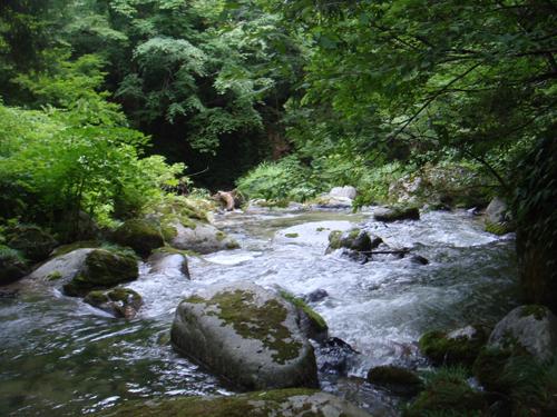 揖斐川上流