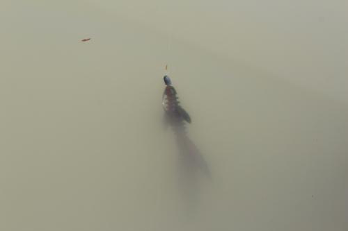 琵琶湖の濁り