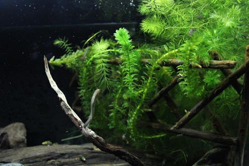琵琶湖水槽