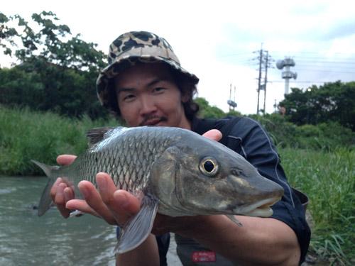 ニゴイ釣り