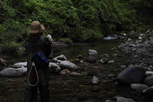 郡上の渓流釣り