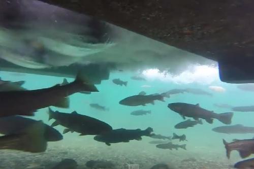 管理釣り場の水車の下