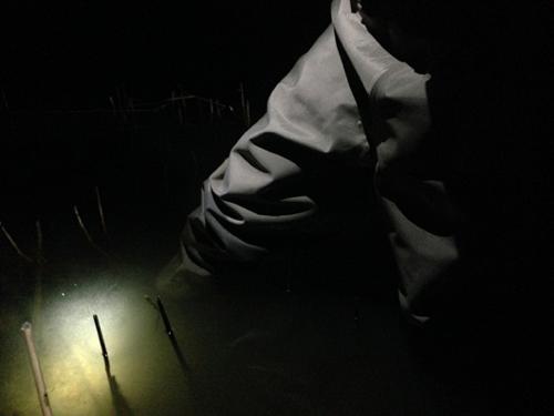 琵琶湖の夜釣り