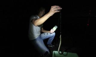 ウナギ釣り