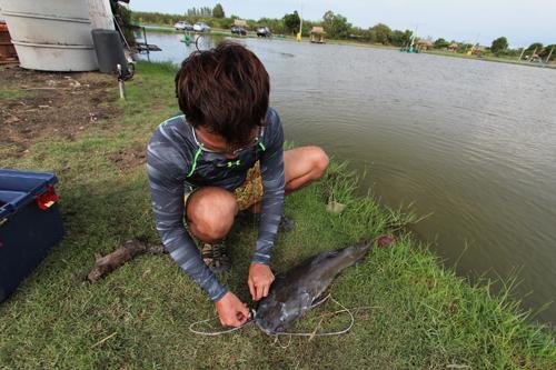 タイの釣り堀