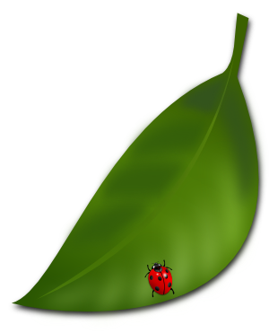葉っぱのイラスト