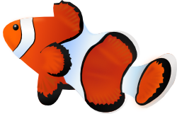 カクレクマノミ(ニモ)のイラスト
