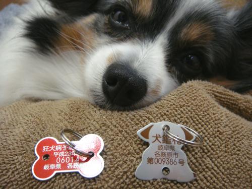 犬鑑札と狂犬病予防注射済票