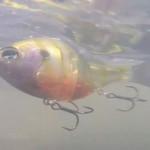ギリング165の水中映像